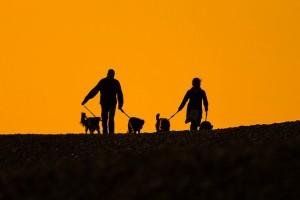 Ratgeber für Hundeerziehung